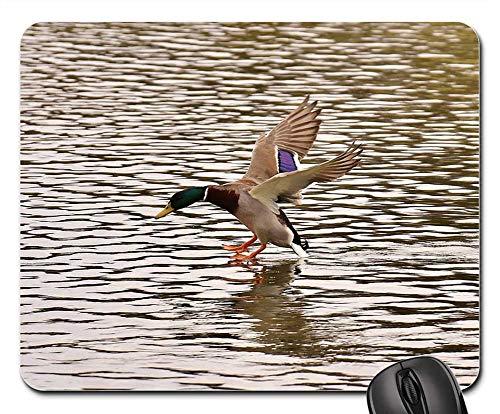 Mouse Pad - Duck Mallard Landing Water Water Bird Duck Bird ()