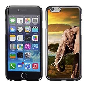 PC/Aluminum Funda Carcasa protectora para Apple Iphone 6 Plus 5.5 Trunk Elephant Africa Mountains Plain / JUSTGO PHONE PROTECTOR