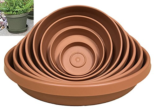 Bloem 51006C, Terra, Saucer Tray, Planter, 6 Inch, 6-Inch ()