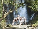 Ceramic Tile Mural - Appaloosa Falls - by Jeff Wilkie - Kitchen backsplash / Bathroom shower