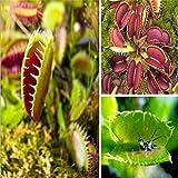 40Pcs Venus Flytrap Dionaea Muscipula Carnivorous Plants Flower Seeds New
