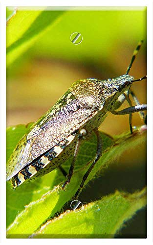 - Single-Gang Blank Wall Plate Cover - Shield Bug Bug Insect Macro Photo Spotted Garden