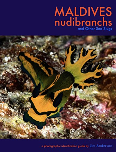 maldives nudibranchs 3 jim anderson amazon com