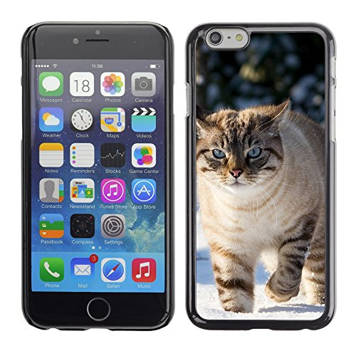 "Premio Sottile Slim Cassa Custodia Case Cover Shell // V00003100 chat dans la neige // Apple iPhone 6 6S 6G 4.7"""