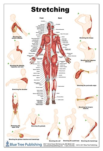 Stretch Poster 24x36inch, Waterproof, Muscle and Exercise
