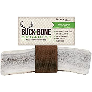 """Buck Bone Organics Elk Antlers For Dogs ~ Premium Grade A Naturally Sourced From Shed Antler, Elk Dog Chew 6-7"""" For Your Pet, Long Lasting, From the USA, Happy Chewing"""