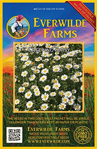 Everwilde Farms - 2000 Creeping Daisy Wildflower Seeds - Gold Vault Jumbo Seed Packet -