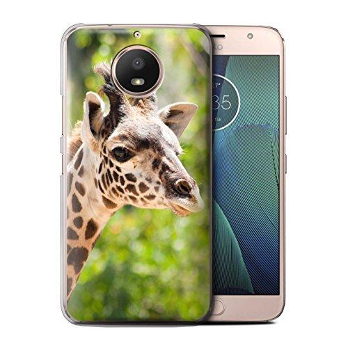 4 Safari Giraffe - STUFF4 Phone Case/Cover for Motorola Moto E4 Plus 2017/Giraffe Design/Wildlife Animals Collection
