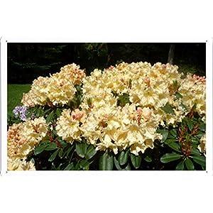 "Flower Tin Sign Azaleas Flowers Shrubs Lawn Park 24644 by Waller's Decor (7.8""x11.8"") 34"