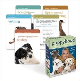 Puppyhood Deck Tips For Raising The Perfect Dog Cesar Millan - 26 dogs puppyhood photos