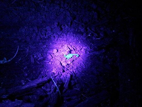 Lifepul Uv Blacklight Pet Urine Detector Finder
