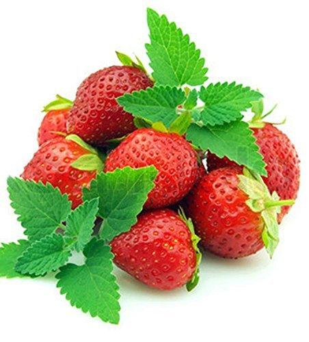 Strawberry Mint Grow Indoors Plant