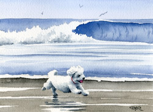 Bichon Frise At The Beach Art Print by Watercolor Artist DJ Rogers