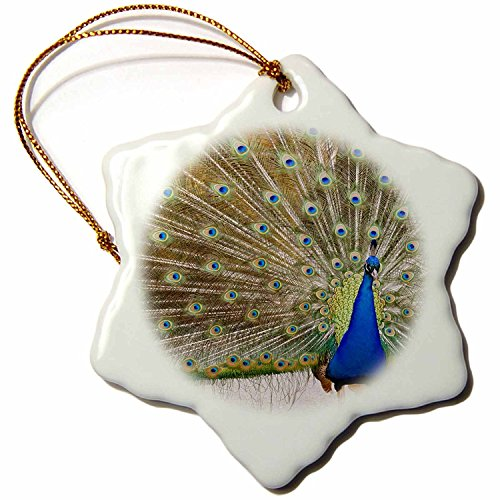 3dRose orn_95813_1 Peacock, Chateau Ste. Michelle Winery, Washington US48 JMI0068 Janis Miglavs Snowflake Porcelain Ornament, 3-Inch