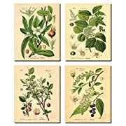 Gango Home Decor Popular Old-Fashioned Plant Botanical Prints; Four 8x10in Unframed Paper Posters