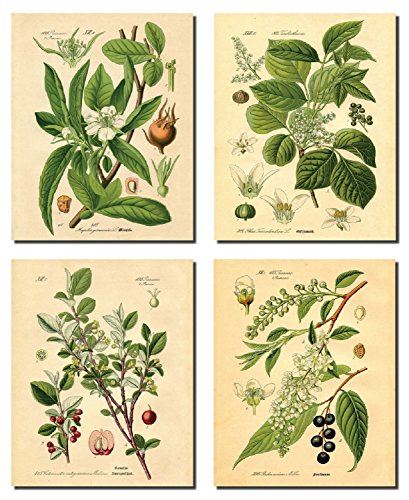 Plant Old Print - Gango Home Decor Popular Old-Fashioned Plant Botanical Prints; Four 8x10in Unframed Paper Posters