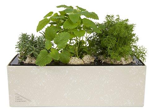Planter Lemon (The Three Company Live Aromatic Herb Combo in Self-Watering Planter (Lavender, Chamomile, Lemon Balm), Find Your Zen LiveBlend)