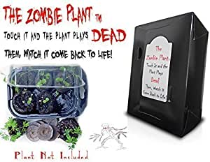 Zombie Plant Grow KIT- (Touch It and It Plays Dead!) Unique Nature Kit- Grow a Fun Interactive House Plant That Plays Dead When Touched & Comes Back to Life in Minutes! Great Christmas Gift Idea!