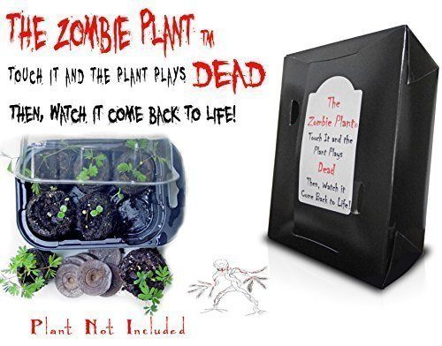 Zombie Plant Grow Kit- (Touch It and It Plays Dead) Unique Nature Kit - Grow a Fun Interactive House Plant That Plays Dead When Touched & Comes Back to Life in Minutes. Amazing Year Round Gift Idea. -