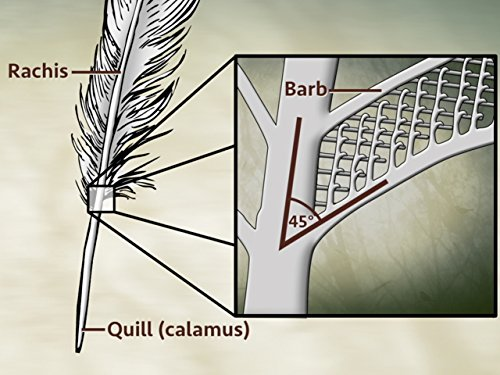 Feather Guide - Basic Bird Anatomy