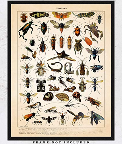 - Vintage Insects Wall Art Print: Unique Room Decor for Boys, Girls, Men & Women - (11x14) Unframed Picture - Great Gift Idea