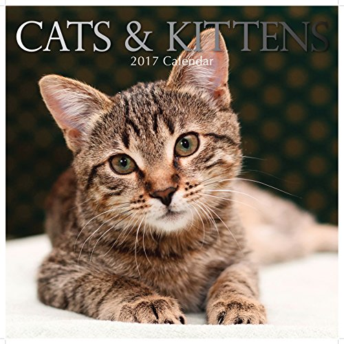 Beautiful Images of Cute Cats & Kittens 2017 Monthly Wall Calendar, 12
