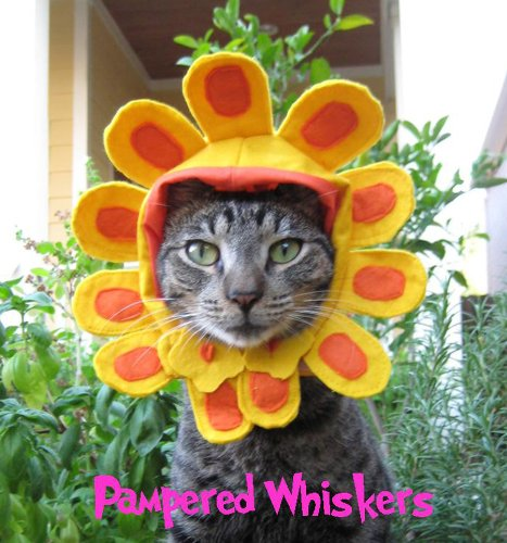 Pampered Whiskers Flower Costume for dogs and cats with 6-10