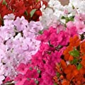 Outsidepride Impatiens Logro Mix Seed
