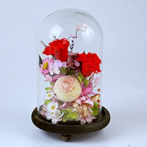 Preserved Fresh Flower Enchanted Carnation,Handmade Never Withered Natural Real Eternal Life carnation in Glass Dome Cover with Gift Box for Anniversary,Birthday,The best gift for mother 51