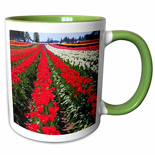 3dRose Danita Delimont - Farms - USA, Oregon, Woodburn, Wooden Shoe Tulip Farm - US38 RBR0707 - Rick A Brown - 11oz Two-Tone Green Mug - Outlet Oregon Woodburn
