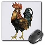 3dRose LLC 8 X 8 X 0.25 Inches Vintage Antique Bird Illustration Cock Rooster Chicken Mouse Pad (mp_119023_1)