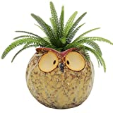 GeLive Owl Planter Ceramic Succulent Plant Pot Fun Animal Flower Container Decoration Windowsill Box with Drainage Hole