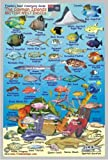 """Cayman Islands Reef Creatures Guide Franko Maps Laminated Fish Card 4""""x6"""""""