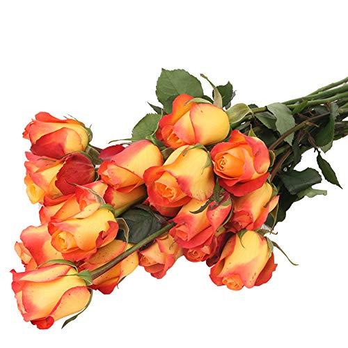 Colorful Rose hep Flower Seeds for Home Garden Yard Decoration, 50 Seeds (Orange Red Rose Seeds)