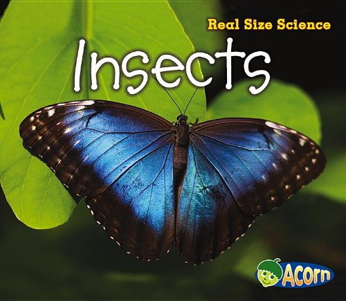 Insects: Real Size Science pdf epub