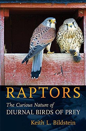Raptors: The Curious Nature of Diurnal Birds of Prey