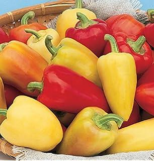 zur Herstellung mexikanischer Saucen!!,20 Samen von unserer ungarischen Farm samenfest KEINE Pesztizide Tomatillo nur organische D/ünger