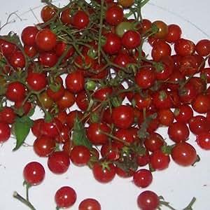 Solanum Pimpinellifolium Seeds