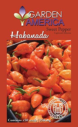 Garden America 50 Seeds 'Habanada' Sweet Pepper Seed (America Seed)