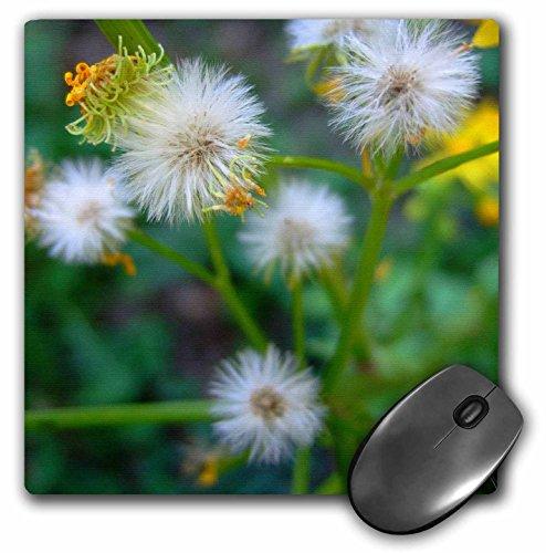 danita-delimont-flower-garden-weed-seeding-itself-mousepad-mp-228242-1