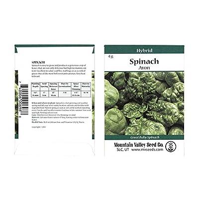 Avon Hybrid Spinach Garden Seeds - Non-GMO Vegetable Garden & Leafy Greens Seeds