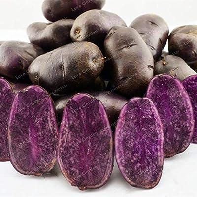 MAPPLEGREEN 100 Pcs Purple Potato Bonsai Purple Sweet Potato Delicious Nutrition Green Vegetable Bonsai Home Garden NO GMO The Best Gift: Garden & Outdoor