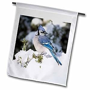 "3dRose fl_209825_1 ""Blue Jay In Keteleeri Juniper In Winter Marion Illinois Usa"" Garden Flag, 12 x 18"""