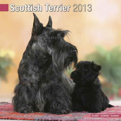 Scottish Terrier 2013 Wall Calendar ()