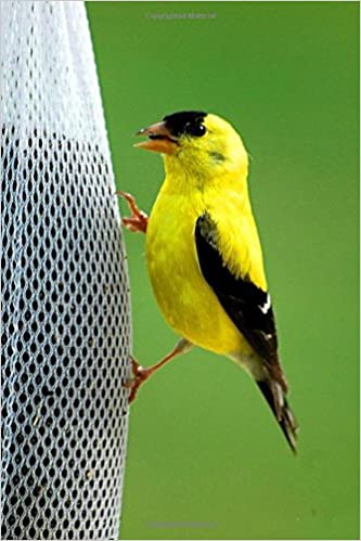 Amazon In Buy Iowa State Bird American Goldfinch Journal Book Online At Low Prices In India Iowa State Bird American Goldfinch Journal Reviews Ratings
