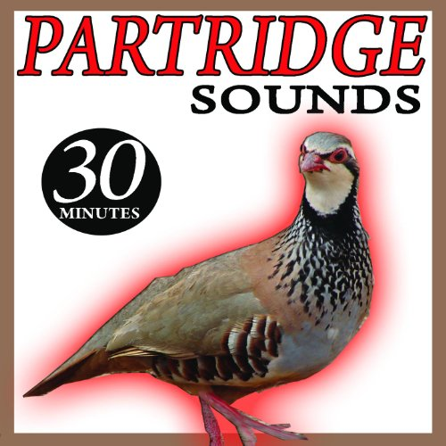 Grey Partridge Facts