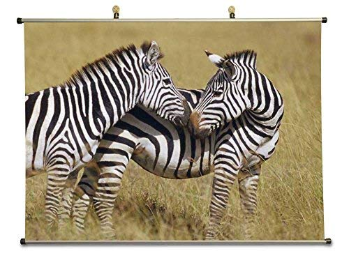 Metal Zebra Wall (Tollyee Two Zebras - Canvas Wall Scroll Poster with Metal stretchers (24x16 inches))