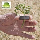 CLONE KING 36 Site Aeroponic Cloning