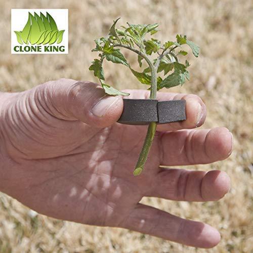 CLONE KING 36 Site Aeroponic Cloning Machine. Expect 100% Success Rates!