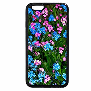 iPhone 6S / iPhone 6 Case (Black) Lovely Forget me not